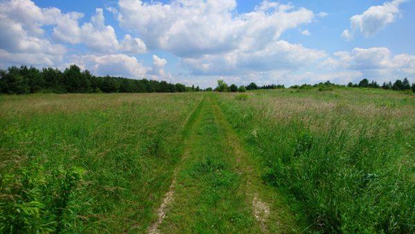Droga polna w kierunku Rabsztyna
