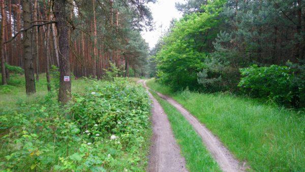 Ścieżka leśna na czerwonym Jurajskim Szlaku Rowerowym Orlich Gniazd