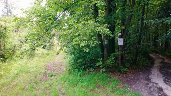 Leśna droga przy Złamanej