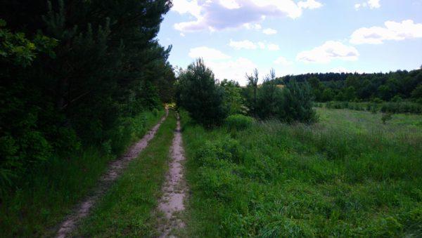 Łagodny zjazd leśną ścieżką