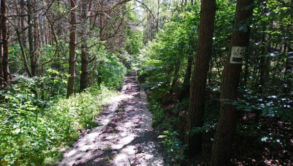Leśna ścieżka z piaszczystymi odcinkami