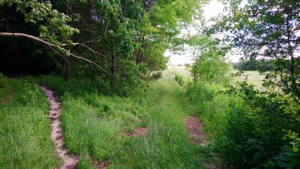 Rozwidlenie drogi leśnej i polnej
