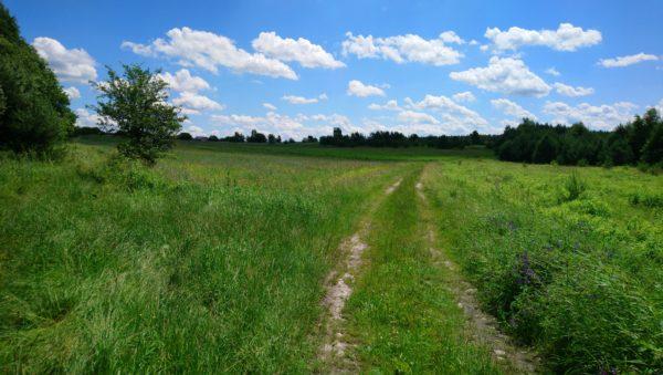 Ścieżka przez pola w stronę Gorenic