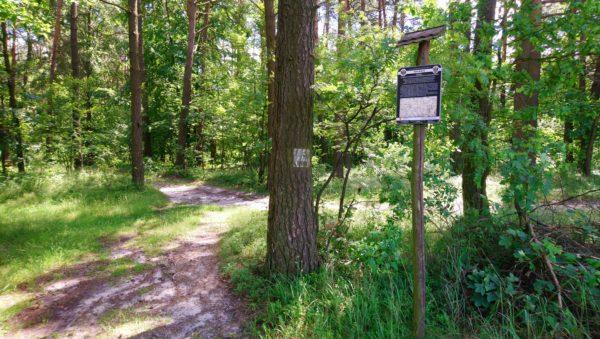 Ścieżka leśna z tablicą informacyjną na szlaku Kordonów granicznych