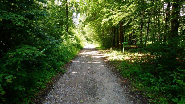 Droga szutrowa za węzłem szlaków pod Osiekiem