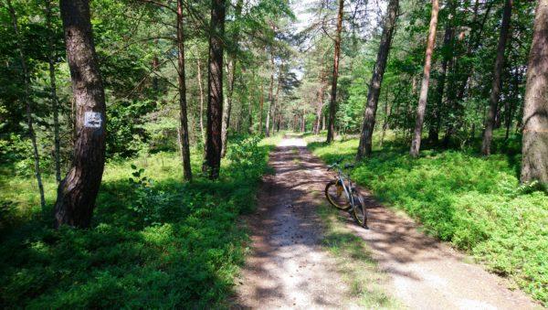 Ścieżka leśna z rowerem