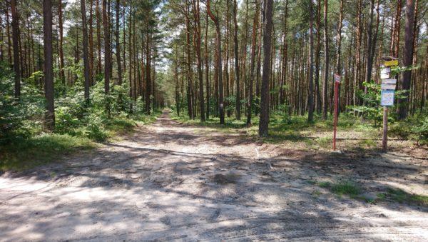 Skrzyżowanie leśne z węzłem szlaku Żurada - Płoki
