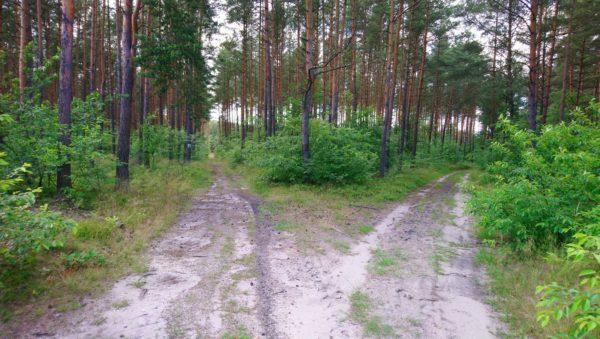 Rozwidlenie dróg leśnych na szlaku Kordonów Granicznych