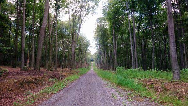 Droga szutrowa w kierunku Bukowna-Podlesia