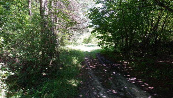 Droga leśna za Ćwiękiem