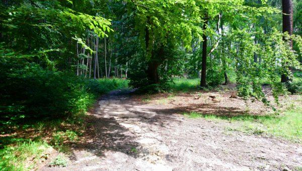 Podjazd leśna drogą na wzniesienie Górka
