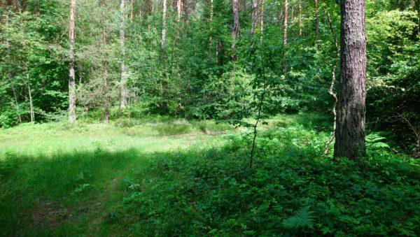 Leśna ścieżka na szlaku Kordonów Granicznych