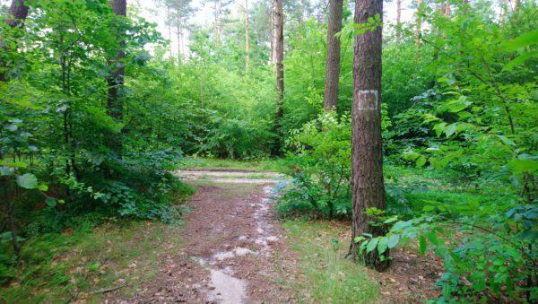 Droga leśna w kierunku punktu wypoczynkowego w Niesułowicach